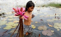 A girl collects water lily flowers at a pond in Kampong Speu province, Cambodia.