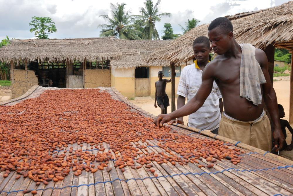 Cocoa is one of the major resources of Ghana. The country was, for several years, among the world' s biggest cocoa producers