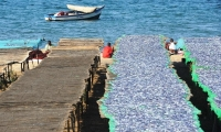 Lake Malawi is globally important for biodiversity conservation due to its outstanding diversity of its fresh water fishes.