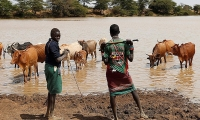 Pokot tribesmen attend their cattle around a lake in Mugui conservancy, Kenya