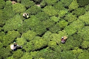 The Nandi Hills, Kenya, renowned for tea cultivation.