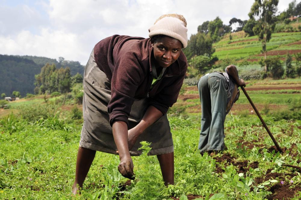 Pray for good harvest, but keep on hoeing. (Basa, Liberia)