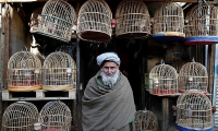 An old man looks on as he stands at a bird market in Kabul.