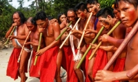 The Wayãpi. They live in the south-eastern border area of French and in the central part of the states of Amapá and Pará in Brazil. The number is approximated 1,615 individuals. Approximately 710 live in French Guiana and 905 live in Brazil.