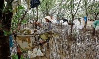 Vietnam. A woman removes plastic waste stuck in tree branches near the beach in Thanh Hoa province.