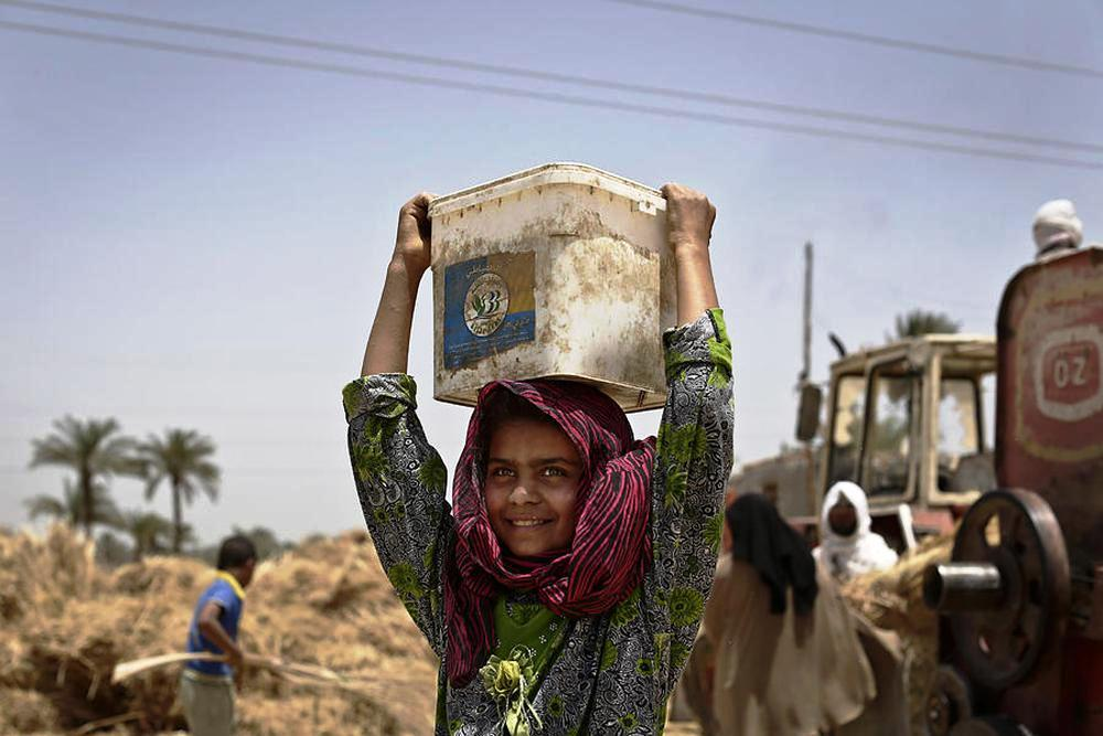 An Egyptian girl harvests wheat on field in Fayoum, south of Cairo.