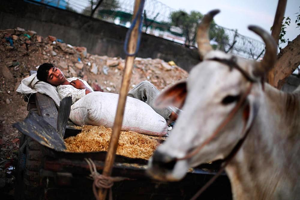 A young labourer sleeps on an ox cart in New Delhi. Asia and the Pacific have the largest numbers (almost 78 million or 9.3% of child population).