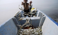 El Salvador. A boy sorts fish. There are 13 million (8.8%) of children in child labour in Latin America and the Caribbean.