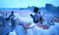 The Dinka set up big cattle camps near the Nile to make sure their animals are close to grazing pastures.