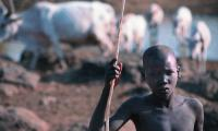 The cattle play a central role in Dinka culture and survival.