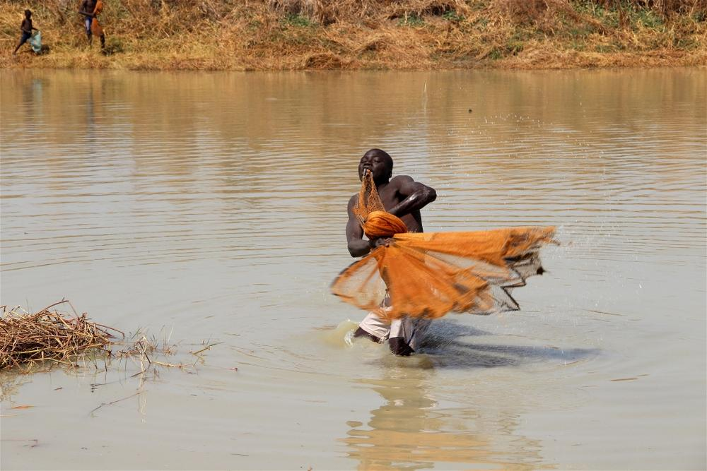 In the south of Chad fresh fish catch often arrives from the ponds formed by water floods.