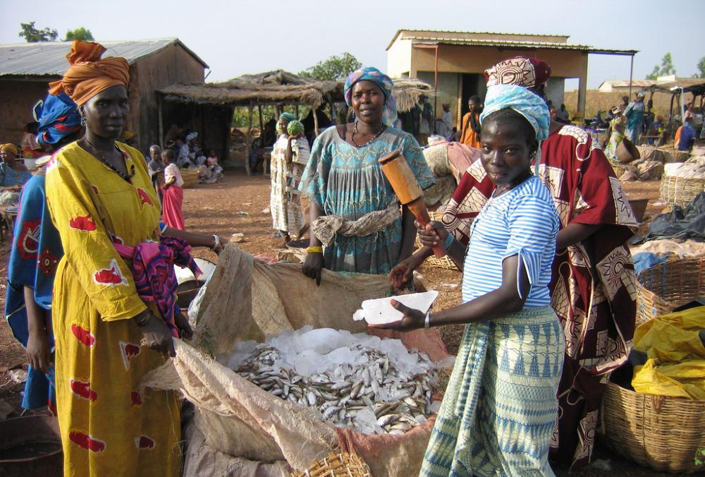 Mali. Fresh fish catch arrives at the market in Bamako