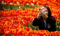 A woman takes a selfie with her smartphone next to a bed of tulips at a Beijing park.