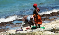 Women cleaning fish. They are the lifeblood of Mozambique Island's economy.