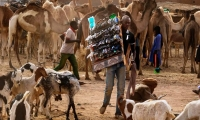 A trader carries a rack of sunglasses past a herd of goats and camels standing in an open air market in Agadez.