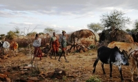 While the men take livestock to water or graze, families set up  temporary  homes.
